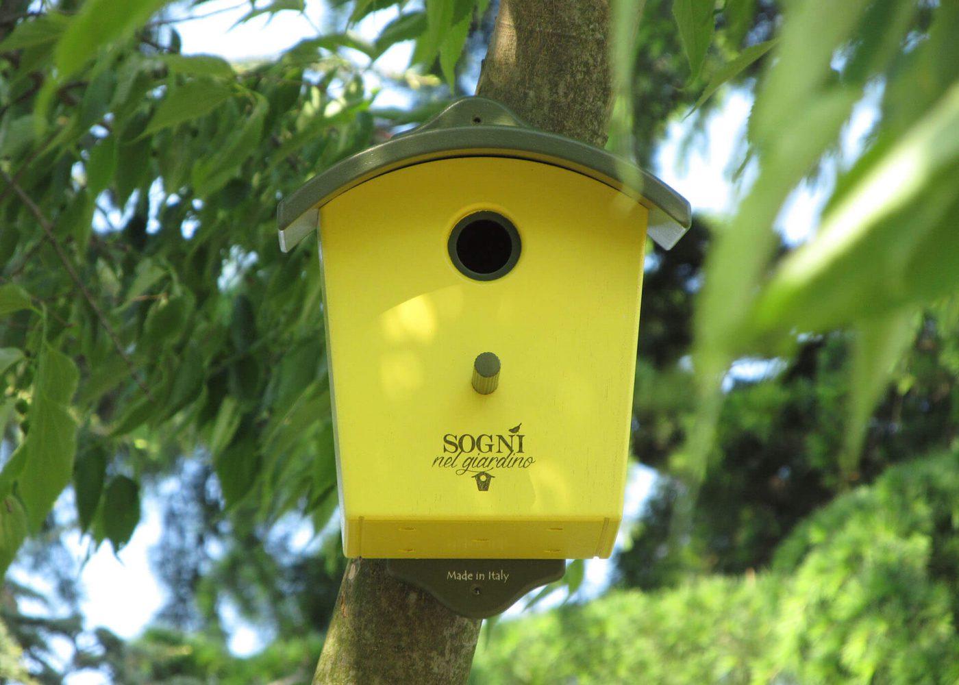 nido ciancellagra giallo